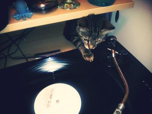 Darran_cat2